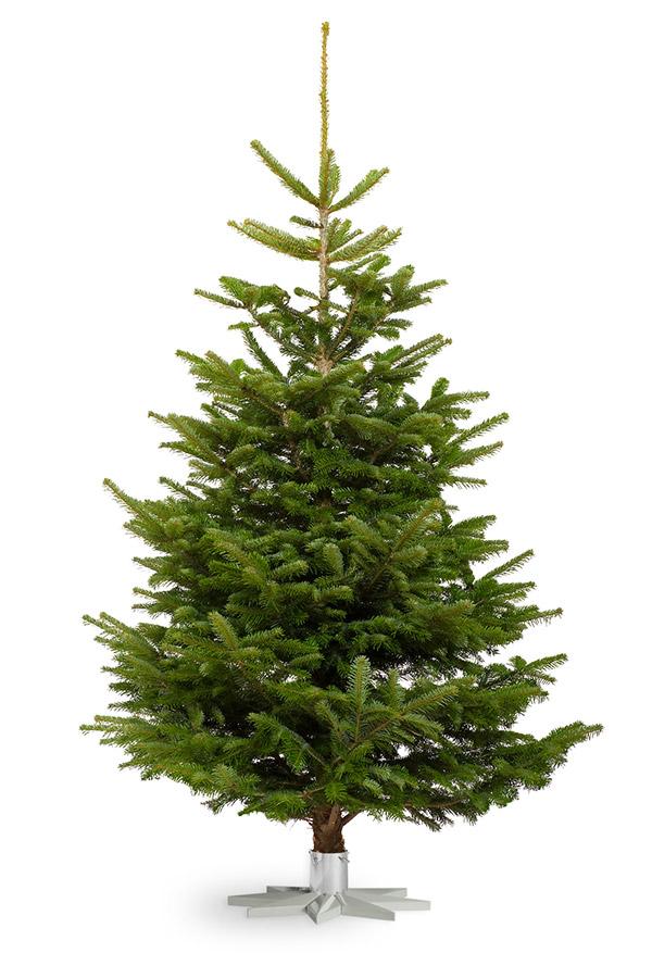 Echte Kerstboom Nordmann Spar Gezaagd